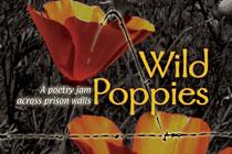 wild-poppies-featured